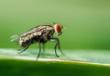 Sciami di mosche e mosconi sugli alimenti? ecco le trappole più avanzate