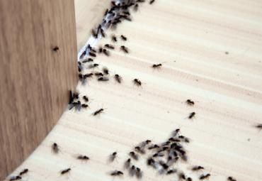 Come difendere il tuo pastificio dalle infestazioni grazie alla bioprotezione