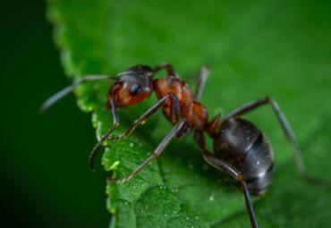 Rimedi contro le formiche:3 bufale e 3 metodi efficaci